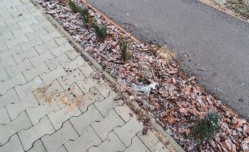 FOTO: Novovysadené dreviny popri chodníkoch cez lesopark vytrhali vandali