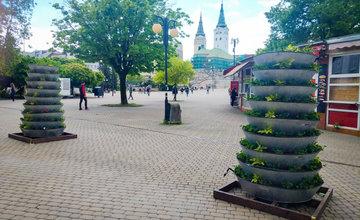 FOTO: Kvetinové pyramídy sú opäť v centre Žiliny