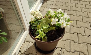 FOTO: Zmiznuté kvety a kvetináče na Vlčincoch