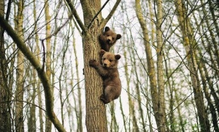 VIDEO: V záchrannej stanici pre zranené živočíchy Zázrivá vychovali dva malé medvede